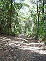 AU-Qld-Yarrabah Trinity Forest Reserve track.jpg