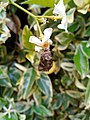 A butterfly stuck to a flower 3.jpg