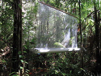 Flight interception trap - A hanging trap in a forest