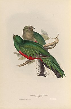 A monograph of the Trogonidae, or family of trogons (40570576671).jpg