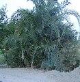 A tree in desert.jpg