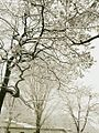 A view in snow.jpg