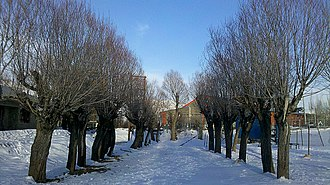 Abali - Image: Ab'ali ski resort inside 3