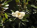 Ab plant 1130.jpg