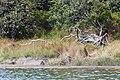 Acadia 2012 08 23 0260 (7958571988).jpg