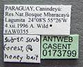 Acromyrmex niger casent0173799 label 1.jpg