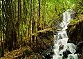 Air Terjun Mini, Taman Hutan Raya R. Soerjo, Pacet, Jawa Timur.jpg