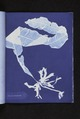 Alaria esculenta (NYPL b11861683-419621).tiff
