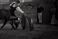 Alexander Fiske-Harrison toreando, 'bullfighting'..tiff