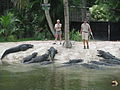 Alligator Bay at Naples Zoo.jpg