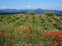 Amapolas, viña y montes (43374720664).jpg