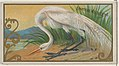 American White Egret, from the Game Birds series (N13) for Allen & Ginter Cigarettes Brands MET DP834659.jpg