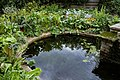 An ornamental pond Capel Manor Enfield London England.jpg
