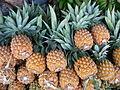 Ananas comosus Victoria P1190440.jpg