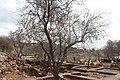 Ancient Shiloh IMG 2928.JPG