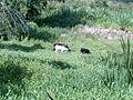Animais da Fazenda - panoramio.jpg