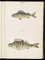 Animal drawings collected by Felix Platter, p1 - (183).jpg