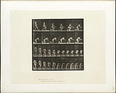 Animal locomotion. Plate 254 (Boston Public Library).jpg