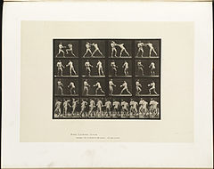 Animal locomotion. Plate 335 (Boston Public Library).jpg