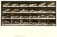 Animal locomotion. Plate 536 (Boston Public Library).jpg