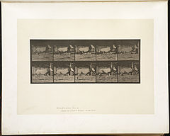 Animal locomotion. Plate 680 (Boston Public Library).jpg