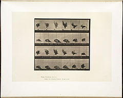 Animal locomotion. Plate 770 (Boston Public Library).jpg