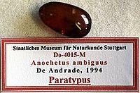Anochetus ambiguus SMNSDO4015 02.jpg