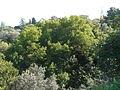 Antic jardí botànic P1250801.jpg
