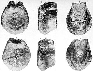 <i>Antrodemus</i> genus of reptiles (fossil)