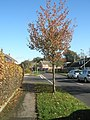 Approaching the junction of an autumnal Cherry Tree Avenue and Willow Tree Avenue - geograph.org.uk - 1575041.jpg