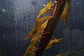 Aqualium (15444180522).jpg