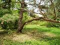Arboretum-sk3.JPG