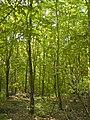 Arboretum Main-Taunus - 001.jpg