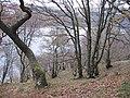 Ardtrostan Wood - geograph.org.uk - 1055992.jpg