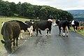 Around Malham, Yorkshire (200714) (9455320026).jpg