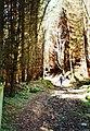 Ascending Bettws Dingle - geograph.org.uk - 707872.jpg