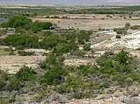 Ash Meadows Point of Rocks Springs 5.jpg