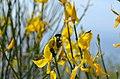 Athos flowers.jpg