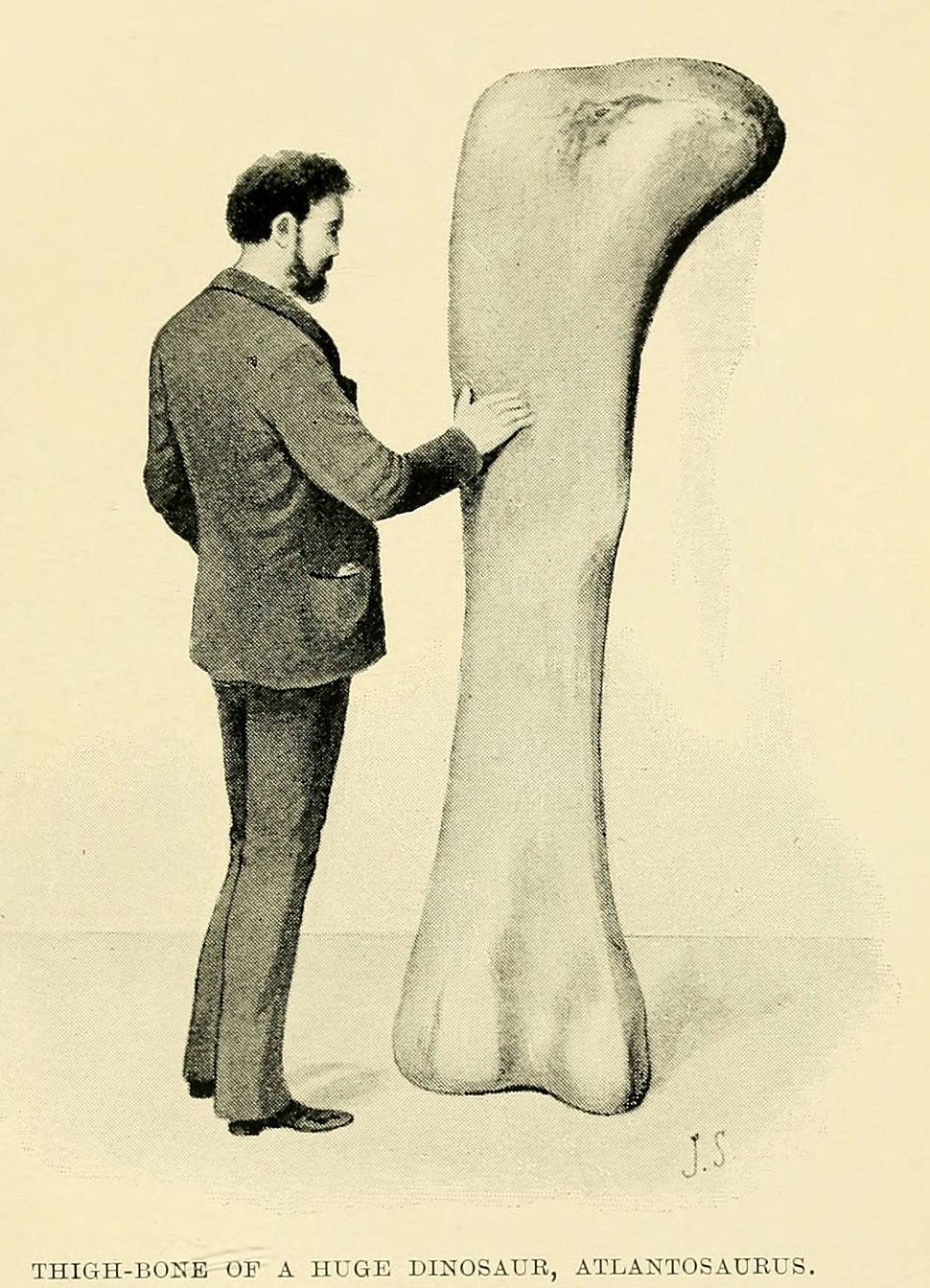 Atlantosaurus femur