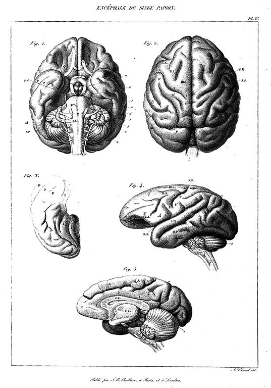 File:Atlas plate from Anatomie du systeme nerveux, 1839-1857 ...