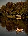 Autumn Sunshine - Trent ^ Mersey Canal - panoramio.jpg