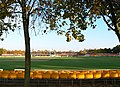 Autumn at Grace Road Cricket Ground - geograph.org.uk - 1001888.jpg
