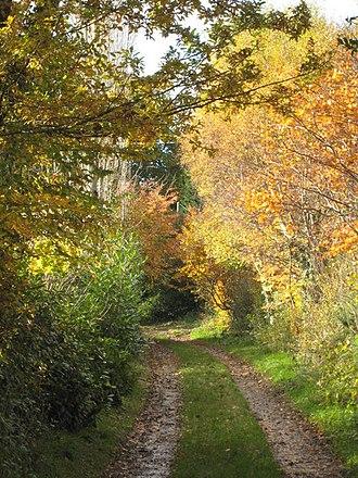 Angarrick - Image: Autumn colour along a footpath at Angarrick geograph.org.uk 1042531