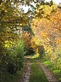 Autumn colour along a footpath at Angarrick - geograph.org.uk - 1042531.jpg