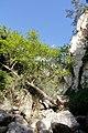 Avakas Gorge, Akamas Peninsula, Cyprus - panoramio (19).jpg