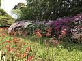 Azalea flowers in Mifuneyama Garden 4.jpg