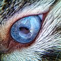 BLUE CAT EYE CLOSE UP.jpg
