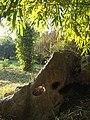 Bamboo Garden (33528517816).jpg