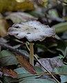 Banjička šuma - Gljiva 1.jpg