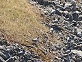 Barrage bouhartma 6543 26.JPG